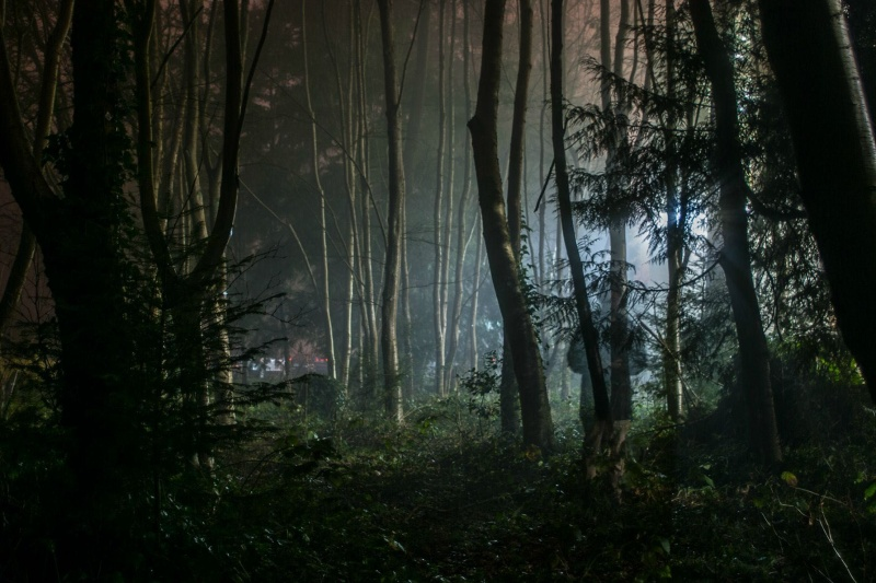 Záhadný les u Budějovic